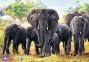 1000 ел. - Африканські слони / Trefl 0