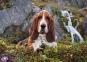 1000 эл. High Quality Collection - Собака у водопада / Clementoni 0