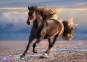 1000 ел. High Quality Collection - Вільна конячка / Clementoni 0