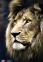 1500 эл. - Портрет льва / Trefl 0