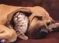 500 эл. High Quality Collection - Пес и кот / Clementoni 0