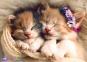 500 ел. - Сплячі котики / Trefl 0
