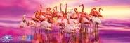 1000 эл. Panorama High Quality Collection - Танец фламинго / Clementoni 0