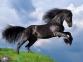 500 ел. High Quality Collection - Фризький чорний кінь / Clementoni 0