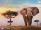 500 ел. High Quality Collection - Захід сонця над Африкою / Clementoni 0