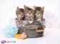 500 ел. High Quality Collection - Котики і мило / Clementoni 0