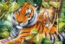 1500 ел. - Говард Робінсон. Два тигри / Interlitho / Trefl 0