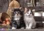1000 ел. High Quality Collection - Милі кошенята / Clementoni 0