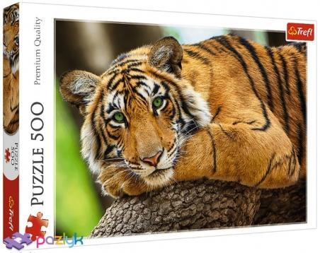 500 эл. - Портрет тигра / Getty Images_L / Trefl